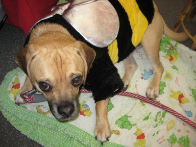 Henri as a cute bee