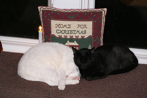 Two cats sleeping in front of a pillow that says Home for Christmas