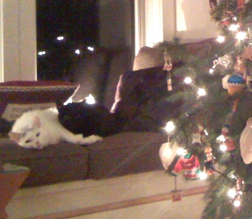 two cats lying next to a Christmas tree