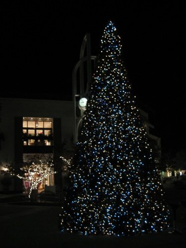 outdoor Christmas tree at night