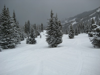 ski run with a lot of trees