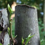 Closeup of tree stumps